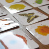 """Карточки для детей """"Цвета и предметы"""""""