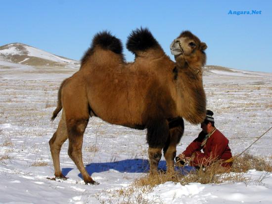 слова на букву в верблюд ладошками