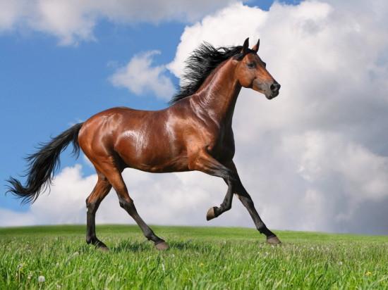 алфавит для детей в картинках, лошадь