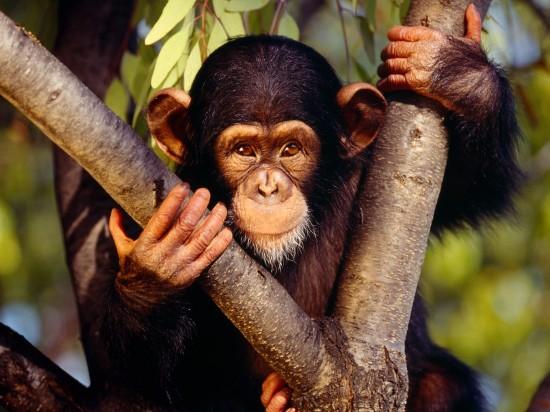 обезьяна, слова на букву о