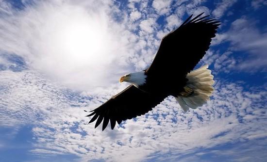 орел, слова на букву о