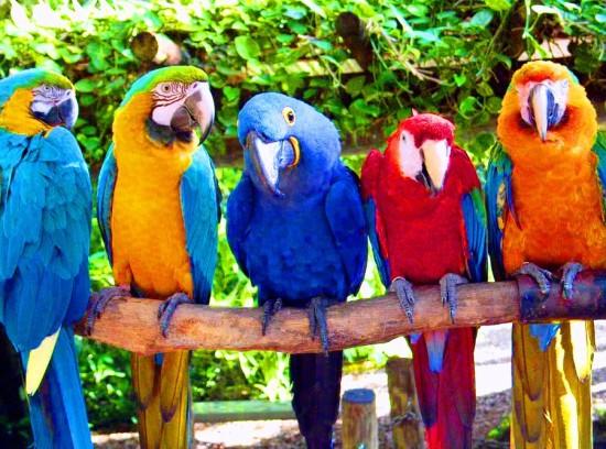 слова на букву п для детей, попугай