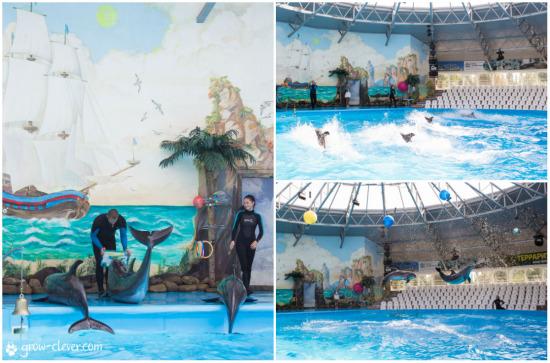 """Киевский дельфинарий """"Немо"""" в Киеве. Отзывы, впечатления, обзор и фотографии"""