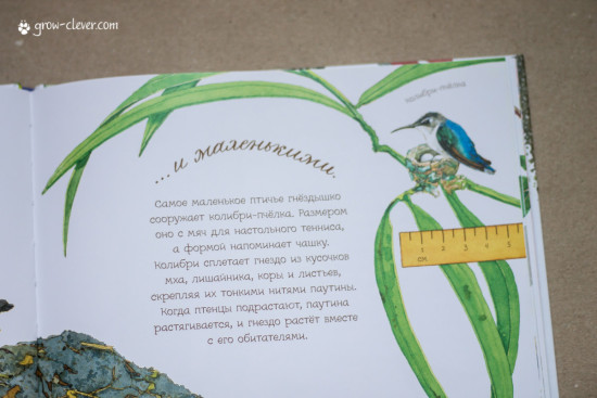 """книга """"В гнезде так шумно!"""" издательства Манн Иванов Фебер, весенние книги"""