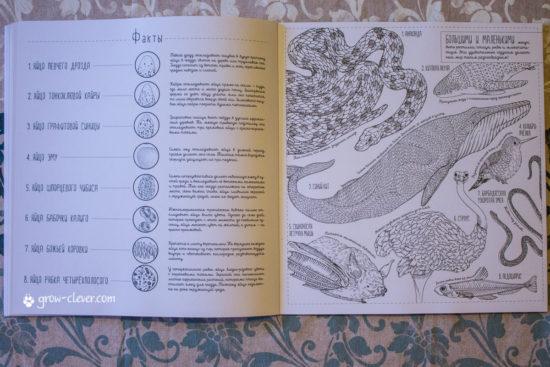 Создания большие и маленькие. 35 постеров для раскрашивания Люси Энгельман