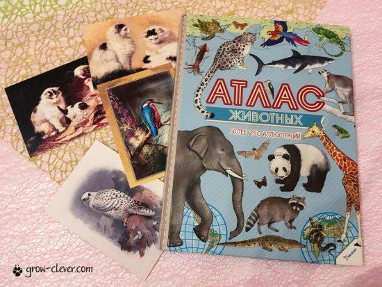 Атлас животных для детей, карты для детей, изучаем географию с мальшами