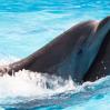 """Киевский дельфинарий """"Немо"""". Впечатления и фотографии"""