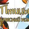 """Тематическая неделя """"Птицы"""""""